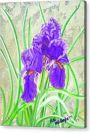 Iris Hope Acrylic Print