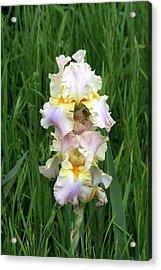 Iris In Grass Acrylic Print by George Ferrell