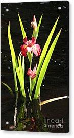 Iris In Water Acrylic Print