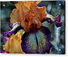 Iris Intimacy Acrylic Print by Angelina Vick