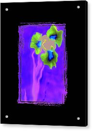 Iris Acrylic Print by K Randall Wilcox