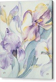 Iris Acrylic Print by Karen Armitage