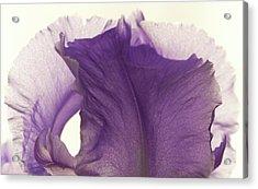 Simplicity Of The Purple Iris Acrylic Print