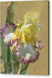 Iris, 'kiss Of Kisses' Acrylic Print
