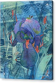 Iris Lace With Wild Columbine Acrylic Print