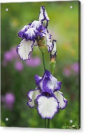 Iris Loop The Loop  Acrylic Print by Rona Black