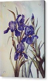 Iris Acrylic Print by Lynne Parker