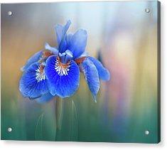 Iris Acrylic Print by Magda Bognar