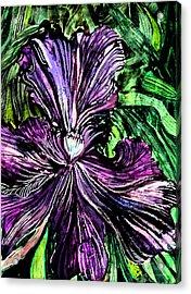 Iris Acrylic Print by Mindy Newman