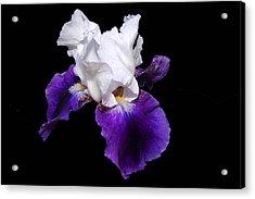 Iris Number One Acrylic Print