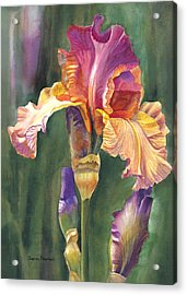 Iris On The Warm Side Acrylic Print by Sharon Freeman