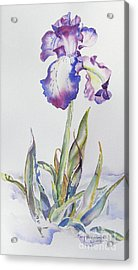 Acrylic Print featuring the painting Iris Passion by Mary Haley-Rocks