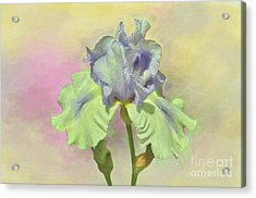 Iris Pastels Acrylic Print by Suzanne Handel