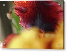 Iris Petals 2 -  Acrylic Print
