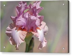 Iris Pond Lily. The Beauty Of Irises Acrylic Print by Jenny Rainbow