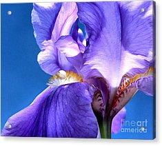 Iris Princess Acrylic Print
