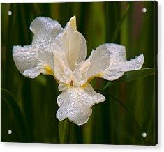 Iris Purity Acrylic Print by Michael Putnam