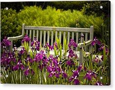 Iris Respite Acrylic Print by Jessica Jenney