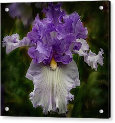 Acrylic Print featuring the photograph Iris Standout by Jean Noren