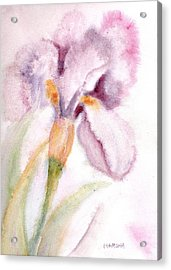 Iris Study I Acrylic Print