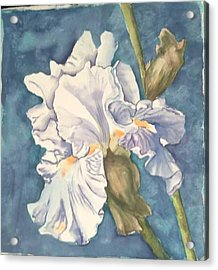 Iris Twenty One Acrylic Print