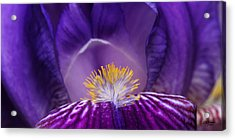 Iris Upclose Acrylic Print