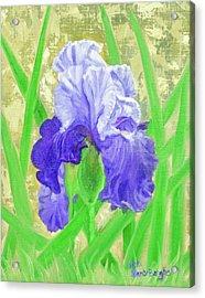 Iris Valor Acrylic Print