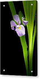 Acrylic Print featuring the photograph Iris Via Iphone by Onyonet  Photo Studios
