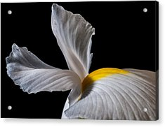 Iris Wings Acrylic Print by Art Barker