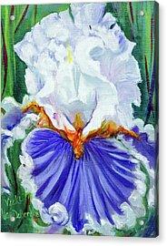 Iris Wisdom Acrylic Print