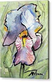 Iris With Impact Acrylic Print by Ron Wilson