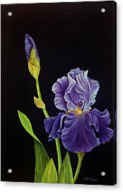 Iris With Purple Ruffles Acrylic Print
