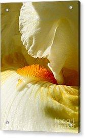 Iris With Touch Of Orange Acrylic Print