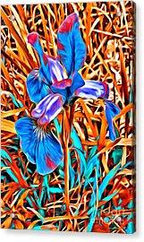 Iris Wow Acrylic Print