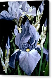Irises In Blue Acrylic Print by Alfred Ng