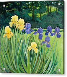 Irises In The Garden Acrylic Print by Betty McGlamery