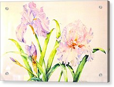 Irises Acrylic Print by Nancy Newman