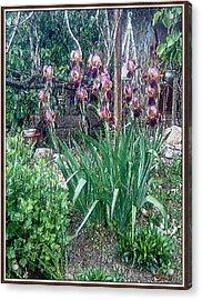 Acrylic Print featuring the digital art Irises by Pemaro