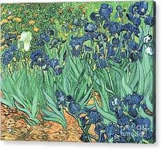 Irises Acrylic Print by Vincent Van Gogh