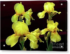 Acrylic Print featuring the photograph Irises Yellow by Jasna Dragun