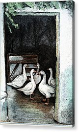 Acrylic Print featuring the painting Irish Ducks by Melinda Saminski
