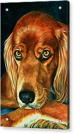Irish Eyes - Irish Setter Acrylic Print