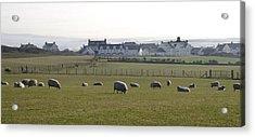 Irish Sheep Farm Acrylic Print by Henri Irizarri