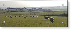 Irish Sheep Farm I Acrylic Print