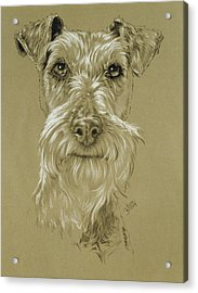 Irish Terrier Acrylic Print by Barbara Keith