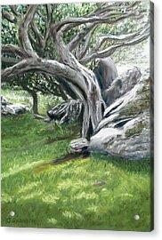 Irish Tree Ring Of Kerry Acrylic Print by Joan Swanson