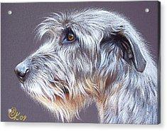 Irish Wolfhound  2 Acrylic Print