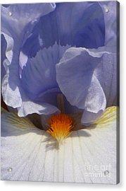 Iris's Iris Acrylic Print