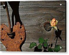Iron Flower Acrylic Print by Mark Stevenson