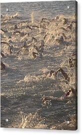 Ironman Triathlon Acrylic Print by G. Brad Lewis